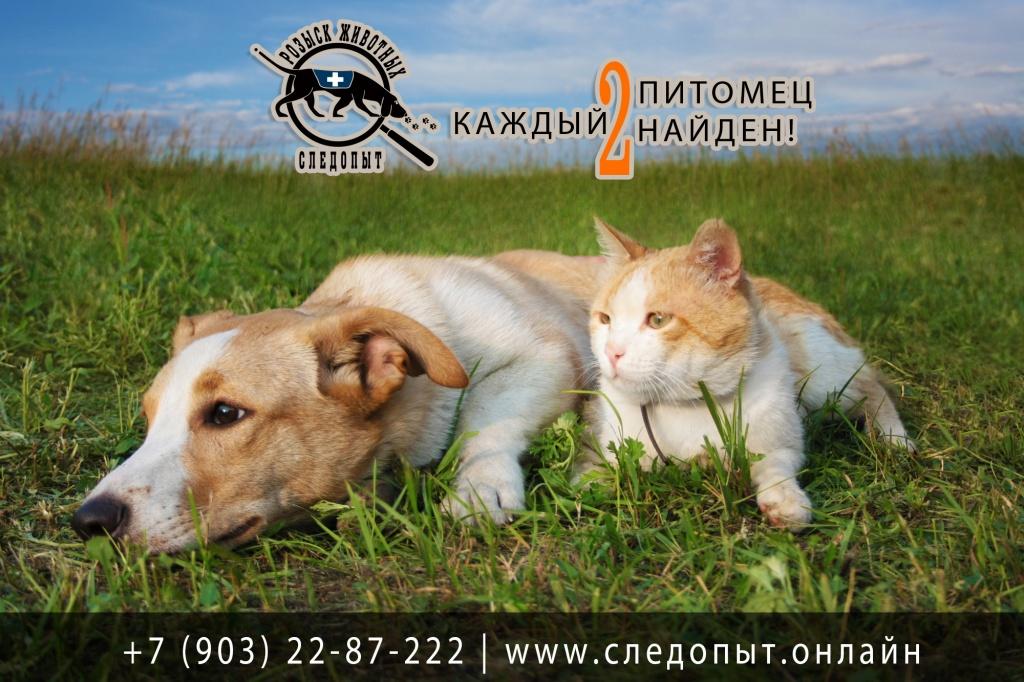 """Услуги по поиску животных от компании """"Следопыт"""" 1"""